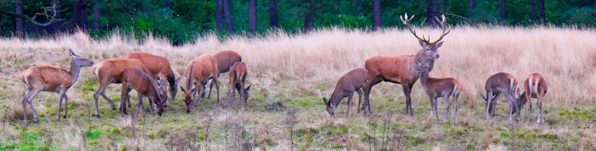 Wandelen in Apeldoorn • wandelen in een natuur-rijke omgeving